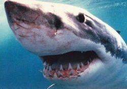 Se os Tubarões Fossem Homens