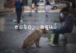 Dica de Vídeo: Direitos dos animais