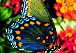 Lagartas, protestos, greves e borboletas: o que podemos aprender?