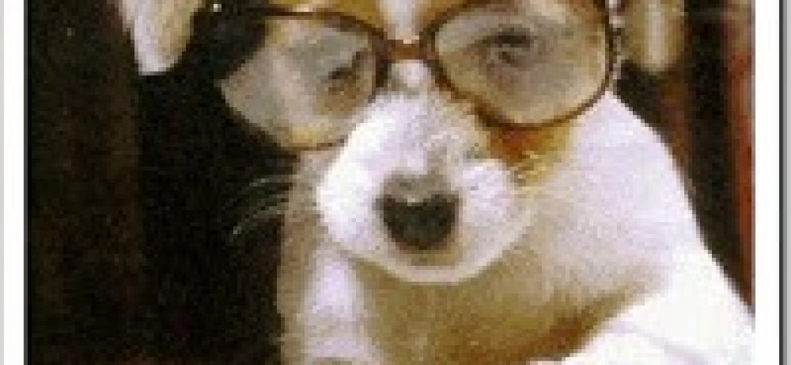 Cão sem Raça Definida e a Interdisciplinaridade